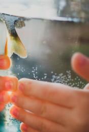 Ни рыба, ни мясо: водоросли келп